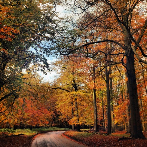 Autumn trees in England, UK. Photo taken using an iPhone by: Sidra Mushtaq